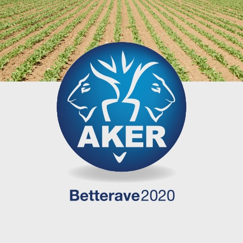 AKER BETTERAVE 2020 : Le site web est à la fois un site vitrine mais également un intranet pour les échanges internationaux des chercheurs - Agence Linéal